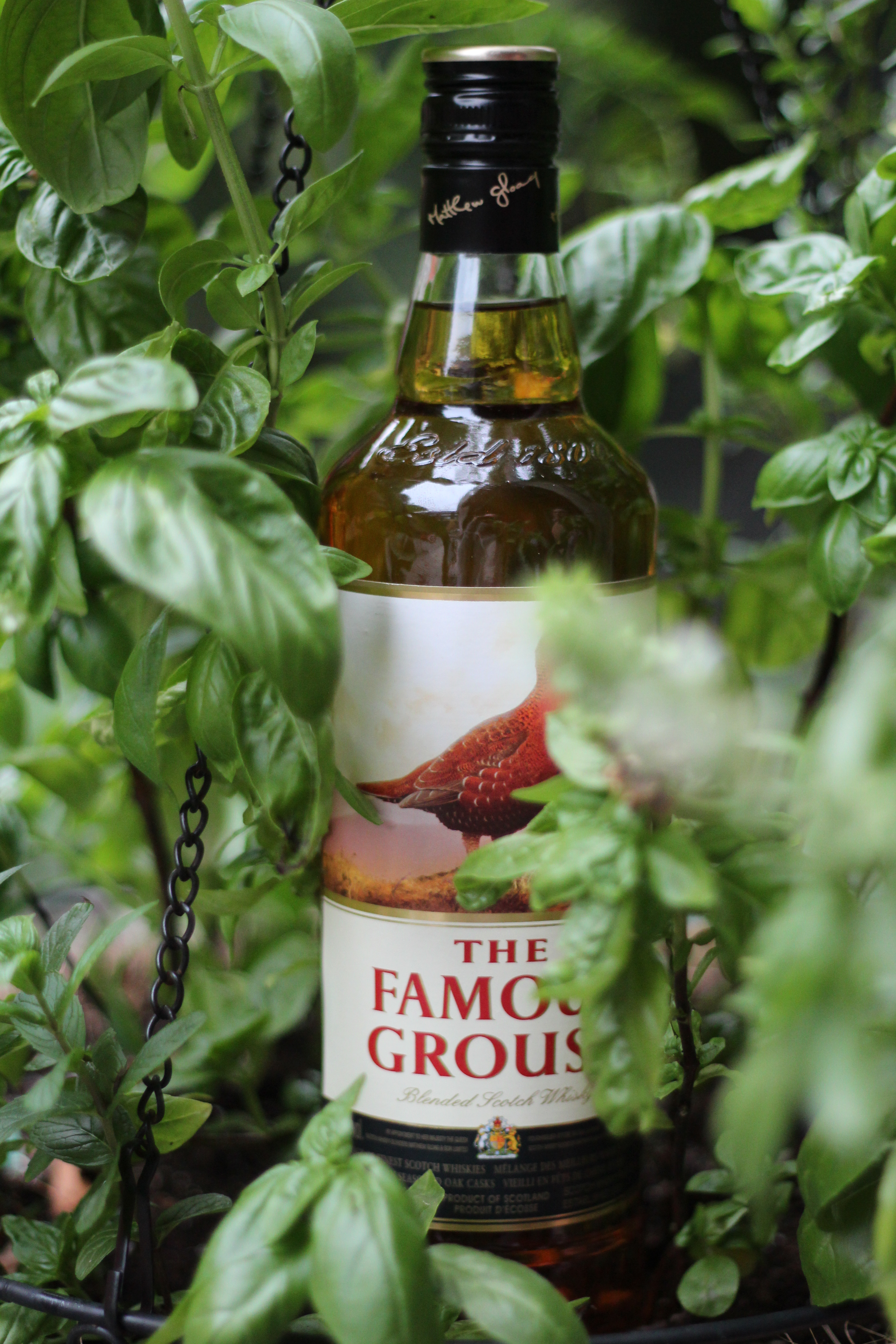 ScotchParty Review #7 – The Famous Grouse with Dan, Jared & Bowick